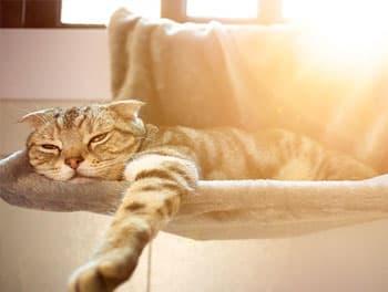 Katze leidet unter der Hitze