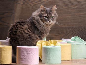 Katze sitzt vor dem Toilettenpapier