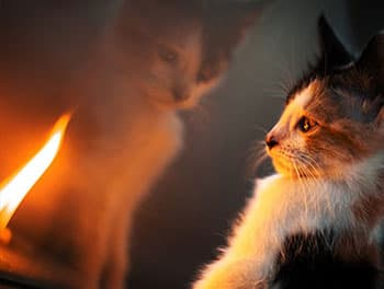 Katze beobachtet die Flamme einer Kerze