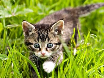 Katze läuft über die Wiese