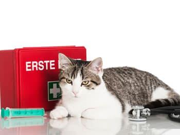 Katze liegt vor dem Erste-Hilfe-Kasten