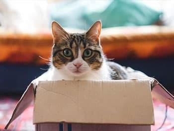 Katze sitzt im Karton