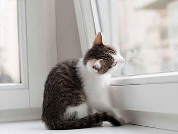 Katze sitzt auf der Fensterbank vor dem gekippten Fenster