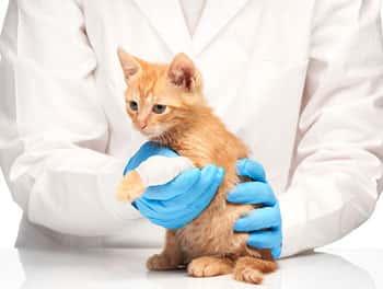 Verletzte Katze beim Tierarzt