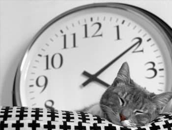 Katze schläft vor der Wanduhr