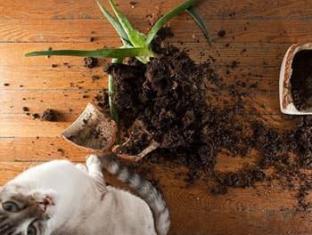 Katze hat den Blumentopf runtergeworfen