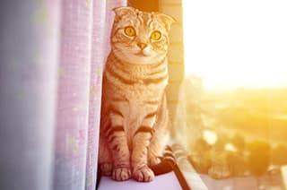Katze sitzt auf der Fensterbank in der Sonne