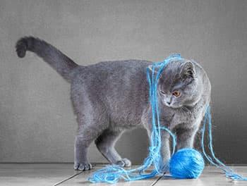 Katze spielt mit Wolle