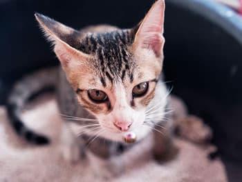 Katze sitzt im Katzenklo