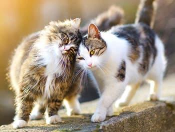 Zwei Katzen schmusen