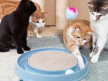 Katzen spielen mit dem Spielzeug