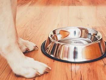 Hund steht vor dem leeren Futternapf