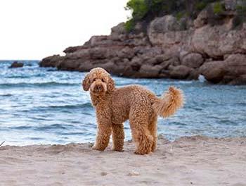 Hund am Mittelmeer