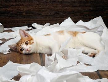 Katze liegt zwischen zerrupftem Papier