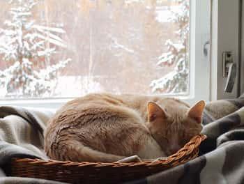 Schlafende Katze im Winter