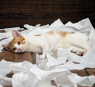 Katze am Weltkatzentag