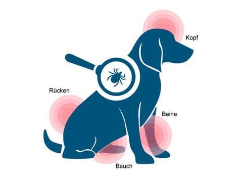 Grafik Hund