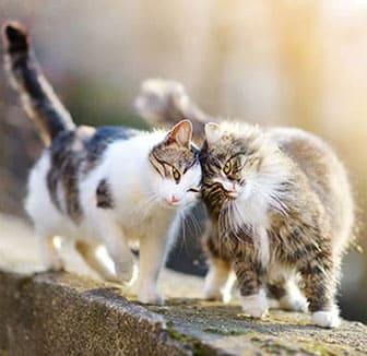 Zwei Katzen im gleichen Alter