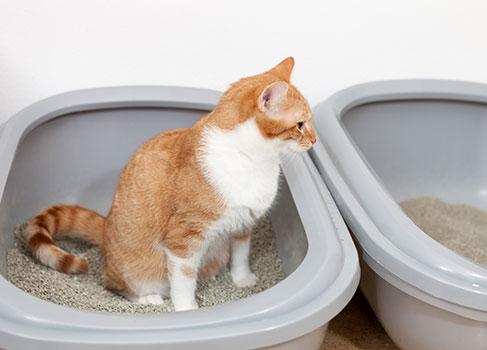 Die Katze benötigt Zeit nach dem Einzug