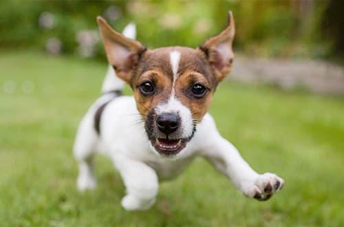 Weiß-brauner Hund auf Wiese
