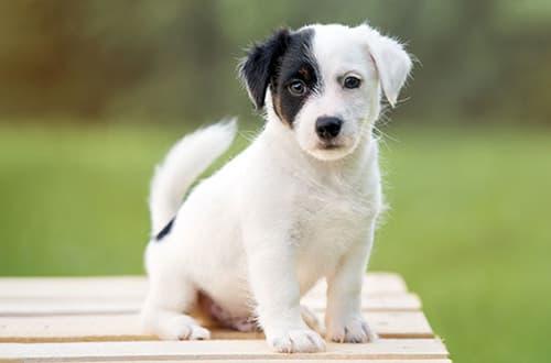 Schwarz-weißer Hund auf einer Bank