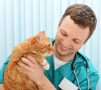 Tierarzt mit Katze auf dem Arm