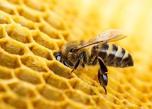 Biene im Stock