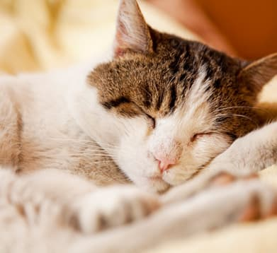 Katze erholt sich nach OP