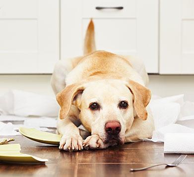 Hund zerstört Porzellan