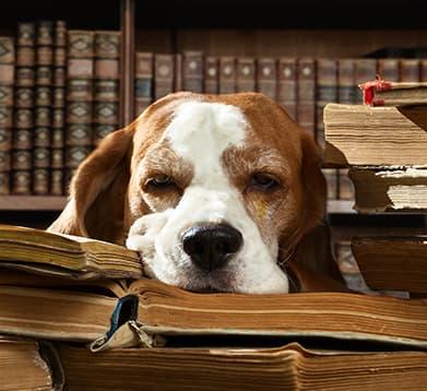 Hund in der Bibliothek