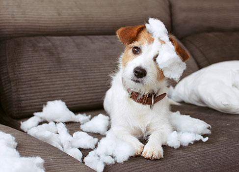 Junder Hund verursacht einen Mietsachschaden