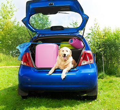 Hund sitzt im Kofferraum