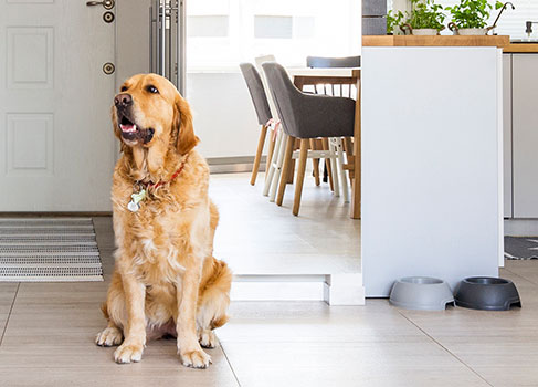 Der Hund zieht ind Haus ein