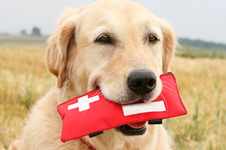 Hund mit Erste-Hilfe-Set