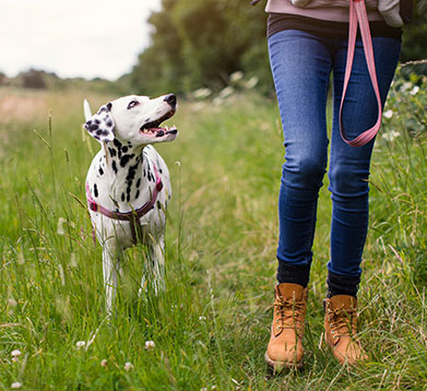 Gassigehen mit dem Hund