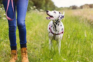 Hund beim Spaziergang