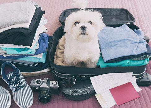 gepackter Koffer für den Urlaub mit dem Hund