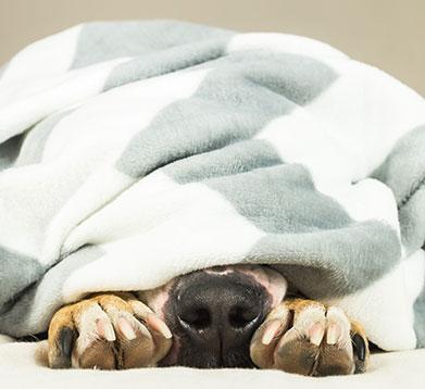 Ängstlicher Hund versteckt sich