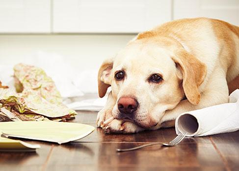 Haftpflichtschaden durch den Hund