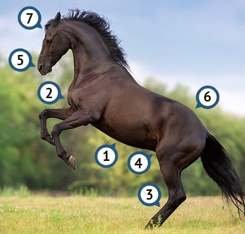 Infografik Operationen beim Pferd