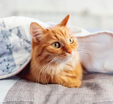 Katze liegt unter der Decke