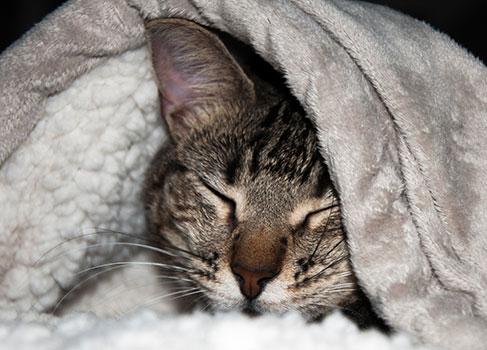 Katze erholt sich nach der OP