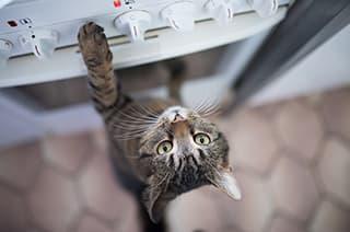 Katze springt auf den Herd