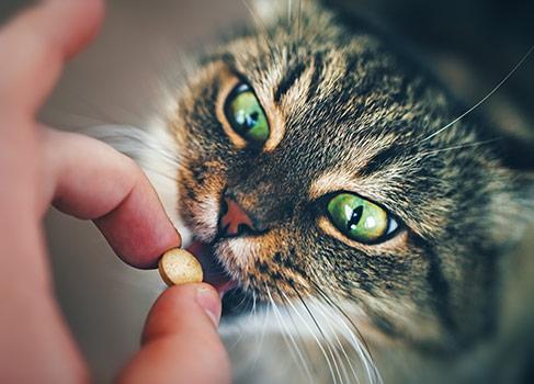 Katze frisst eine Tablette