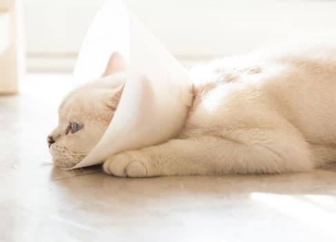 Katze liegt mit einem Plastiktrichter auf dem Boden