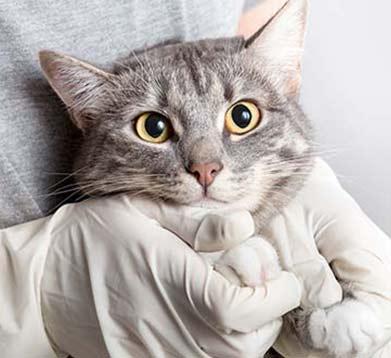 Katze und Tierazt mit Handschuhen