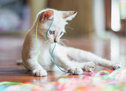 Katze spielt mit Wollfaden