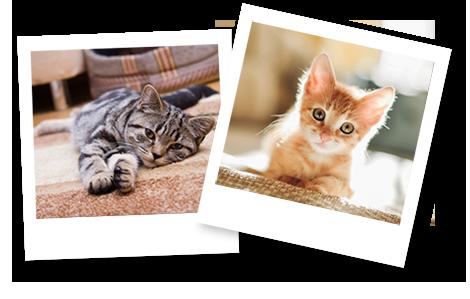 Fotos von Katzen