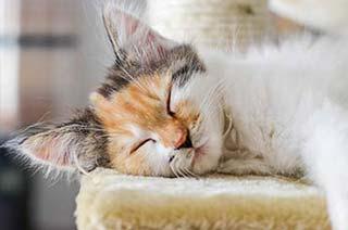 Katze schläft auf einem Kratzbaum