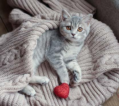 Katze liegt auf einer kuscheligen Decke